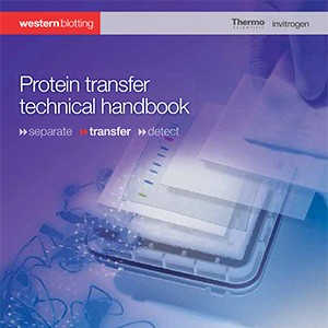 protein-transfer